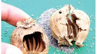 罂粟壳吃了有什么感觉