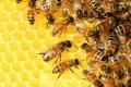 中欧蜂产品相关法规差异知多少